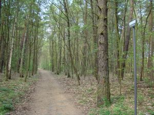 Muur liep dwars door het bos