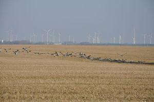 Haßleben ligt in de Uckermark, een prachtig stukje Duitsland dat veel weg heeft van Nederland alleen dan net even wat meer heuvels, windmolens en kraanvogels, Foto: MK